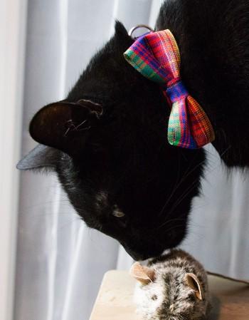 Obroża dla kota - kolorowa kratka