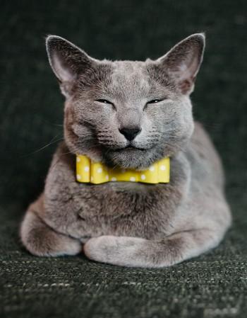 Obroża dla kota - żółta kokardka na czarnym pasku, kropki