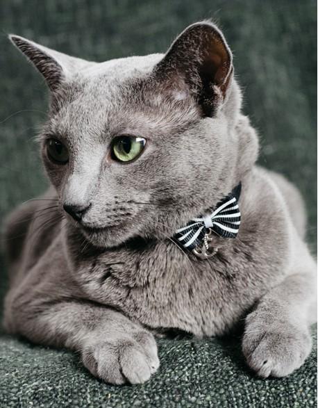 Obroża dla kota - marynarska