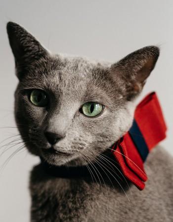 Obroża dla kota - bordowa kokardka na granacie
