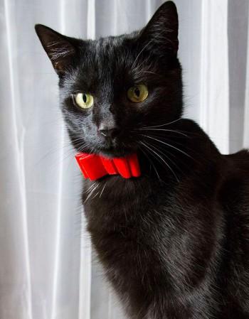 Obroża dla kota -aksamitna czerwona kokardka