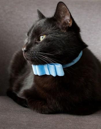 Obroża dla kota - błękitna kokardka na aksamitce