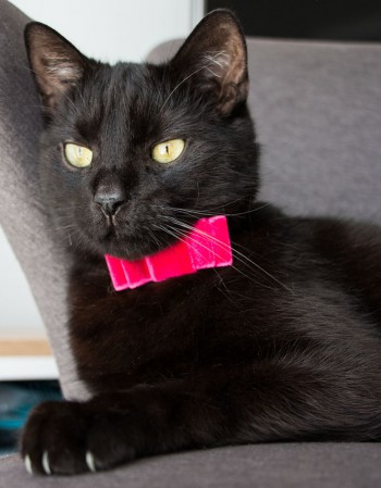Obroża dla kota - różowa kokardka na czarnym pasku w kropki