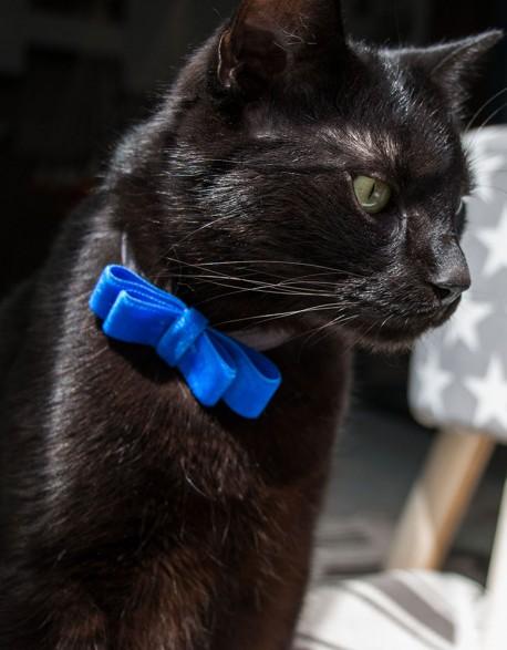 Obroża dla kota - niebieska kokardka na graficie