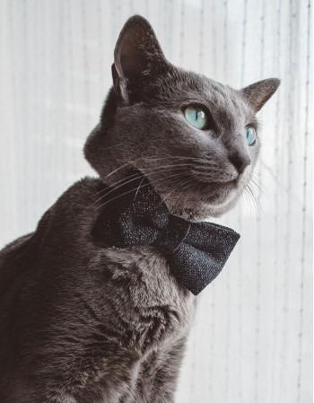 Obroża dla kota - czarna blink blink