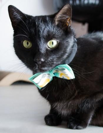 Obroża dla kota - mięta z narzędziami