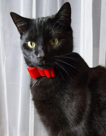 Obroża dla kota - czerwona aksamitka